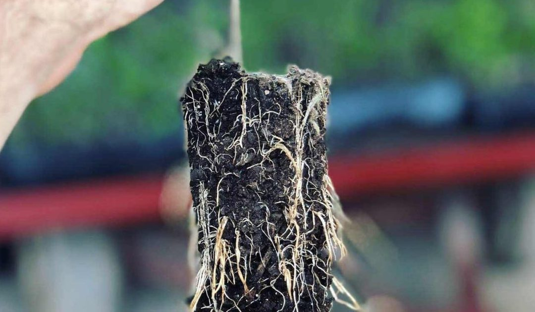 Plant Propagation Aeration, Your Missing Link to Super Charged Crop Transplants.