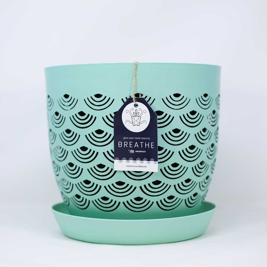 BREATHE mint rediroot indoor plant pot