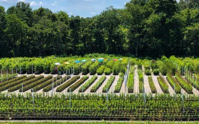 Spotlight on Bouldin Nursery & Greenhouse